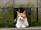 Snapshot of cats on street (Vol.1) 50 pics
