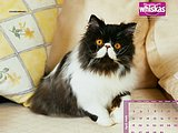 Lovely Kittens in Whiskas Ads 34 pics